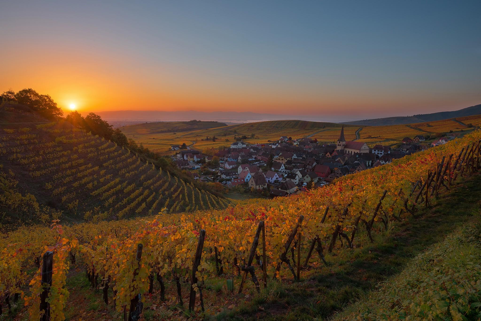 Lever de soleil dans les vignes en Alsace   Paysages diurnes
