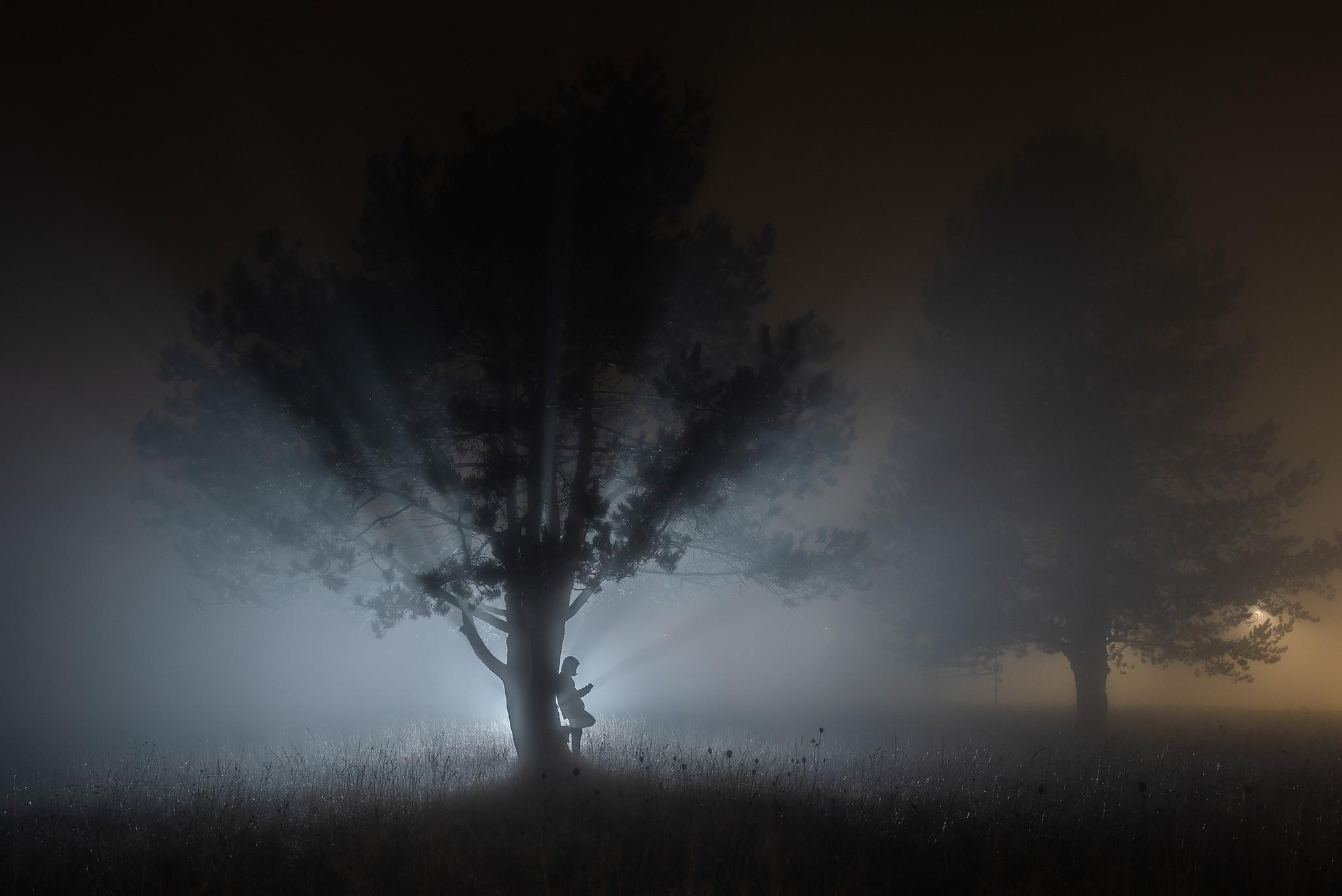 Silhouette d'arbre de nuit dans le brouillard au flash | Paysages nocturnes © Pierre ROLIN - Photographe Nancy - Lorraine / Grand Est